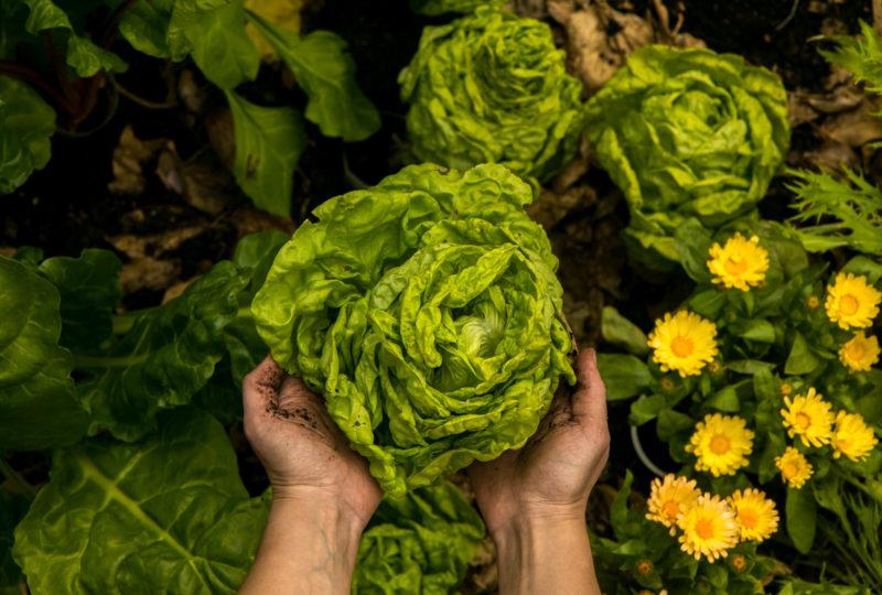 Sustentabilidad, el ingrediente más importante del plato