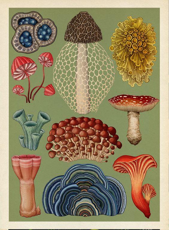 Conociendo el trabajo de Fundación Fungi y la importancia de los hongos