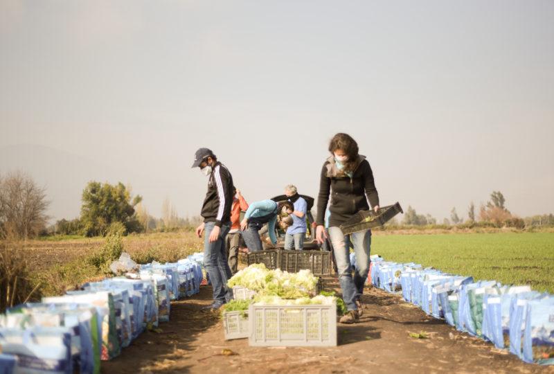 El rol de las cooperativas y redes de autoabastecimiento en la transformación agroecológica