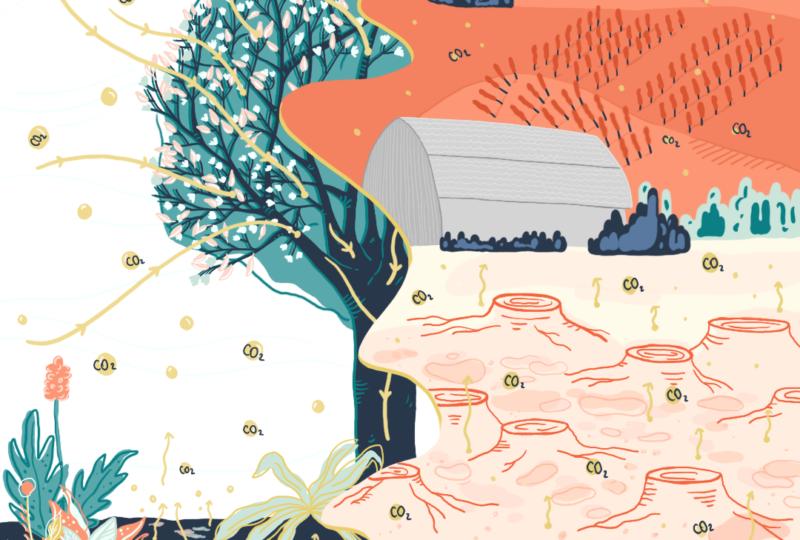 El suelo y su relación con el clima