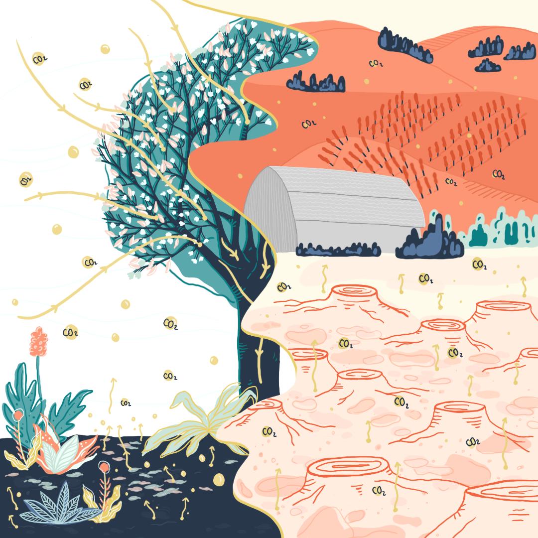 Ilustración de la raíz al plato
