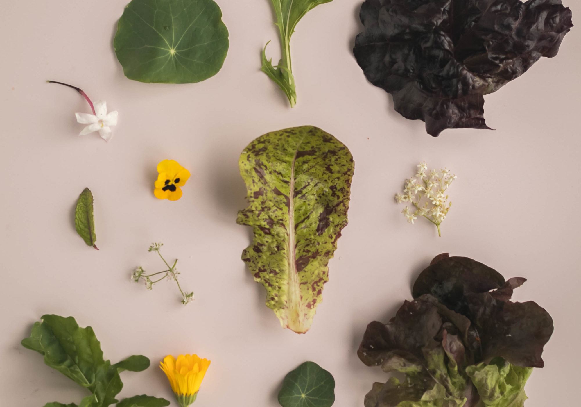 Disminuir nuestra huella ecológica a través de la alimentación