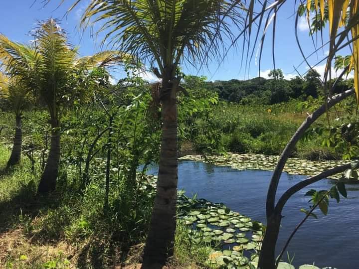 Selva en Brasil