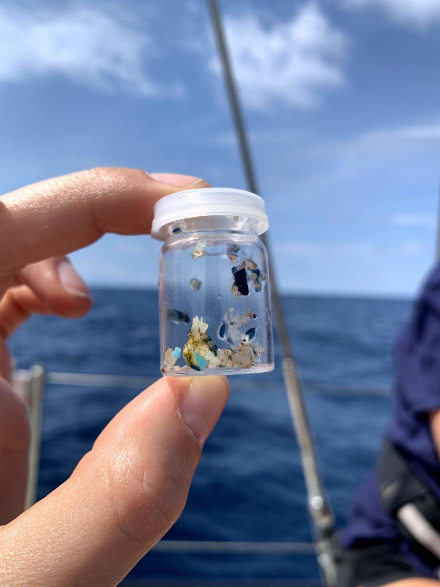Microplasticos recolectados del oceano
