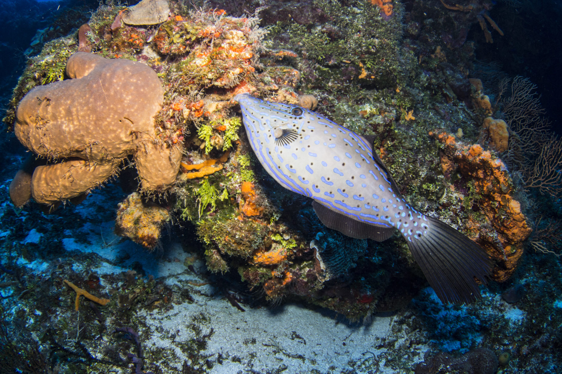 La importancia de los corales y cómo podemos ayudar a restaurarlos