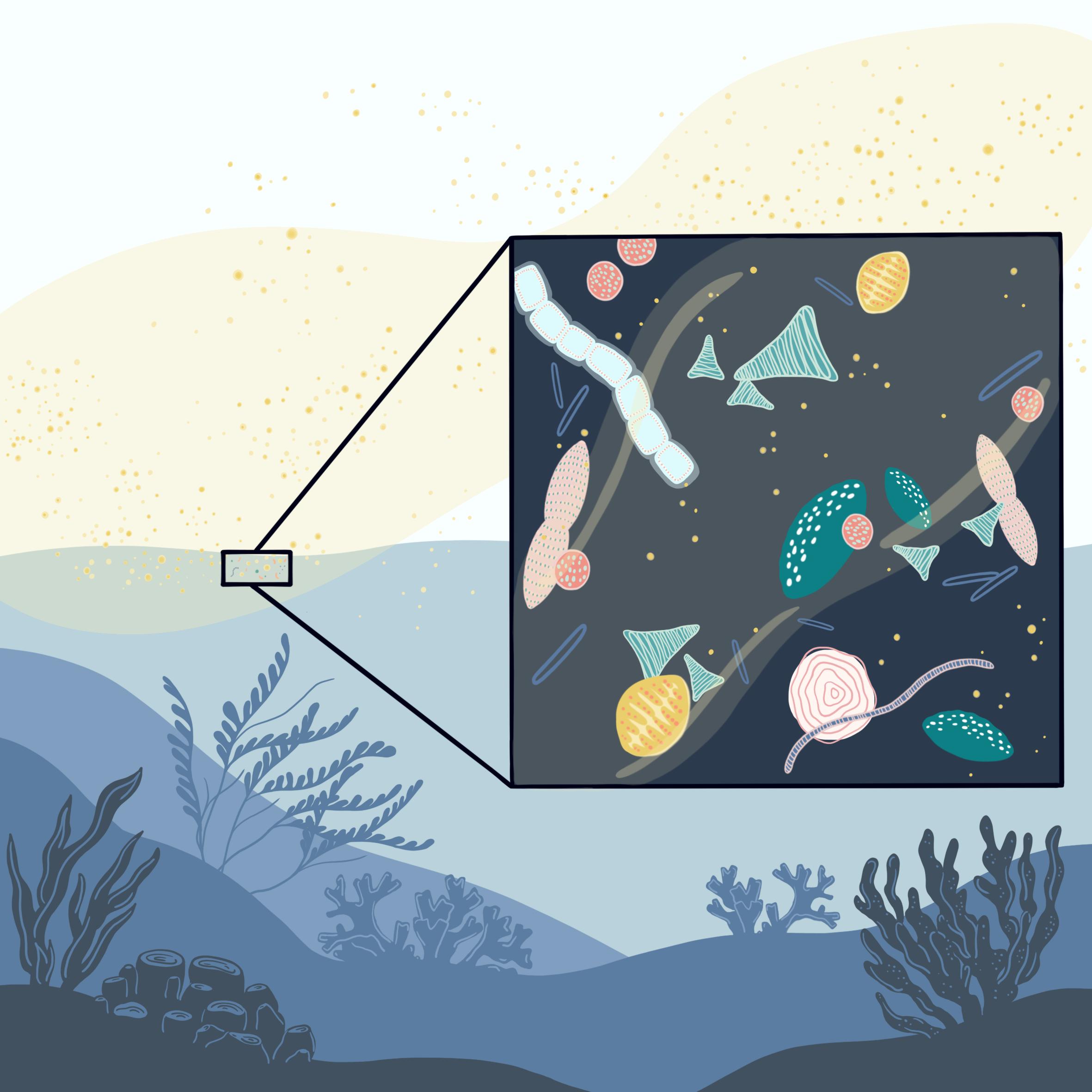 ilustracion diatomeas en el mar
