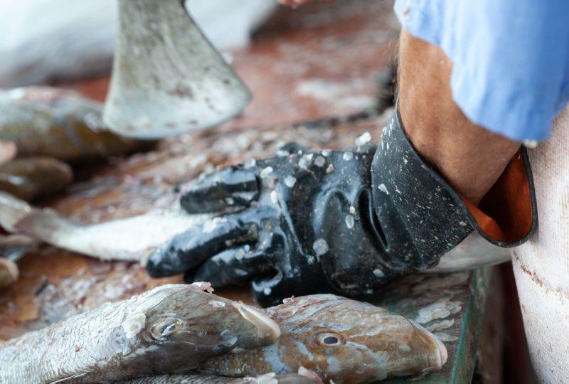 Pescados de descartes: Caldo de herradura o jurel al curry