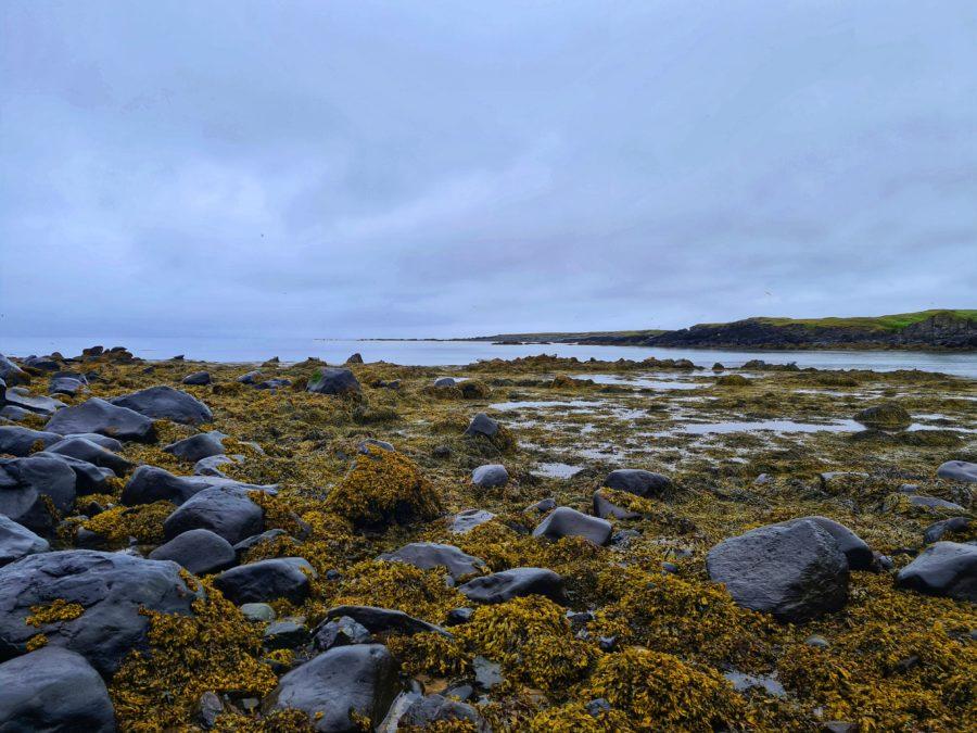 Oro verde : algas comestibles y sus beneficios para la salud