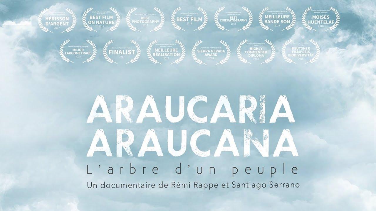 Araucana araucaria