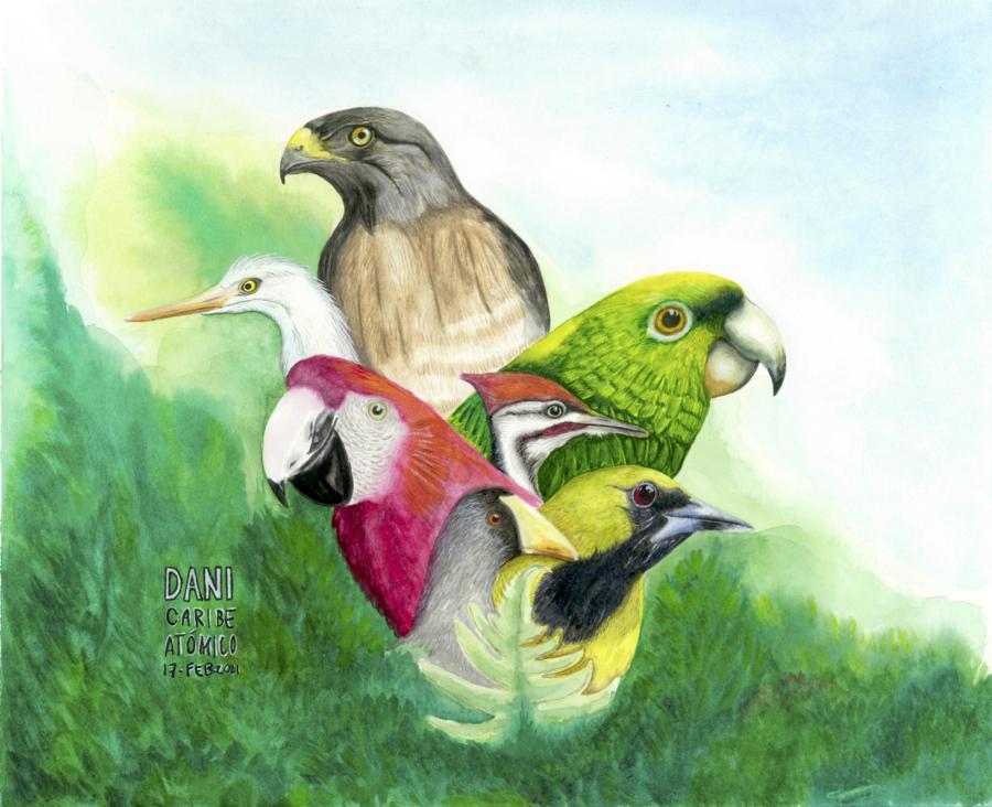 Migracion de aves