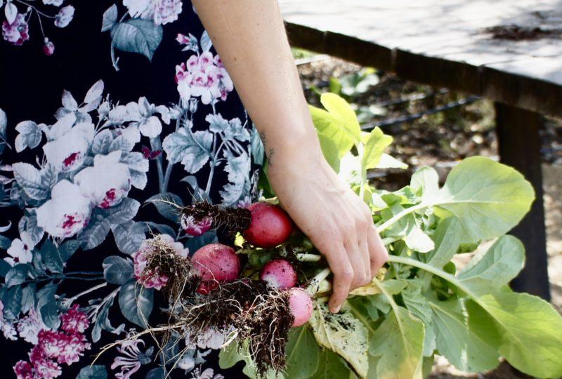 Comiendo según los ritmos de la naturaleza: alimentación estacional y batch cooking