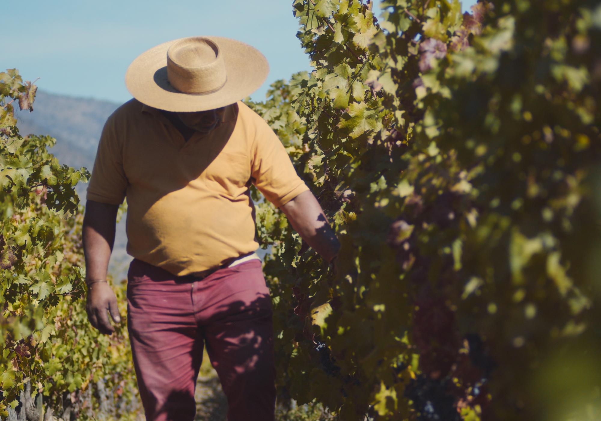Otoño, tiempo de vendimia y para aprender sobre el vino biodinámico