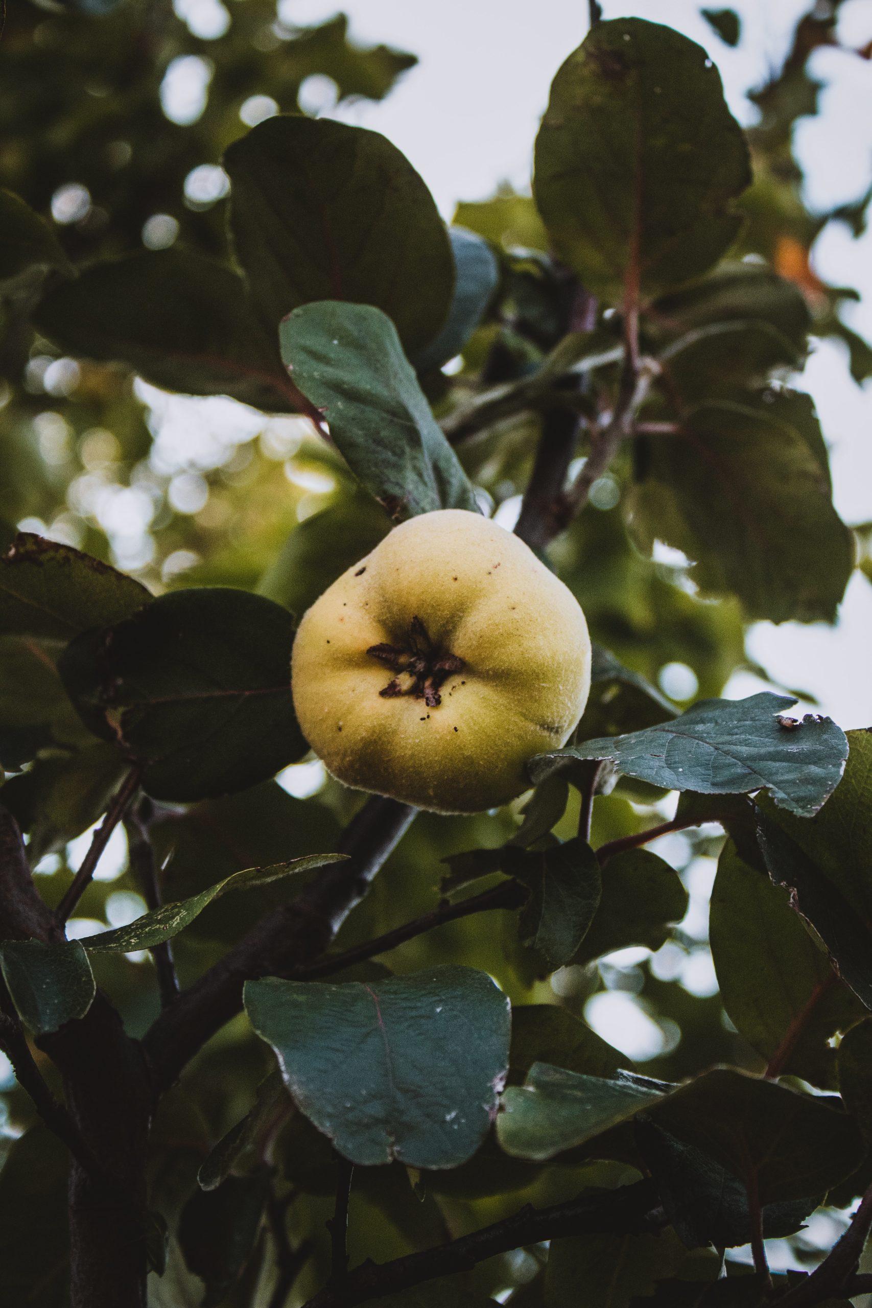 Árboles frutales en otoño