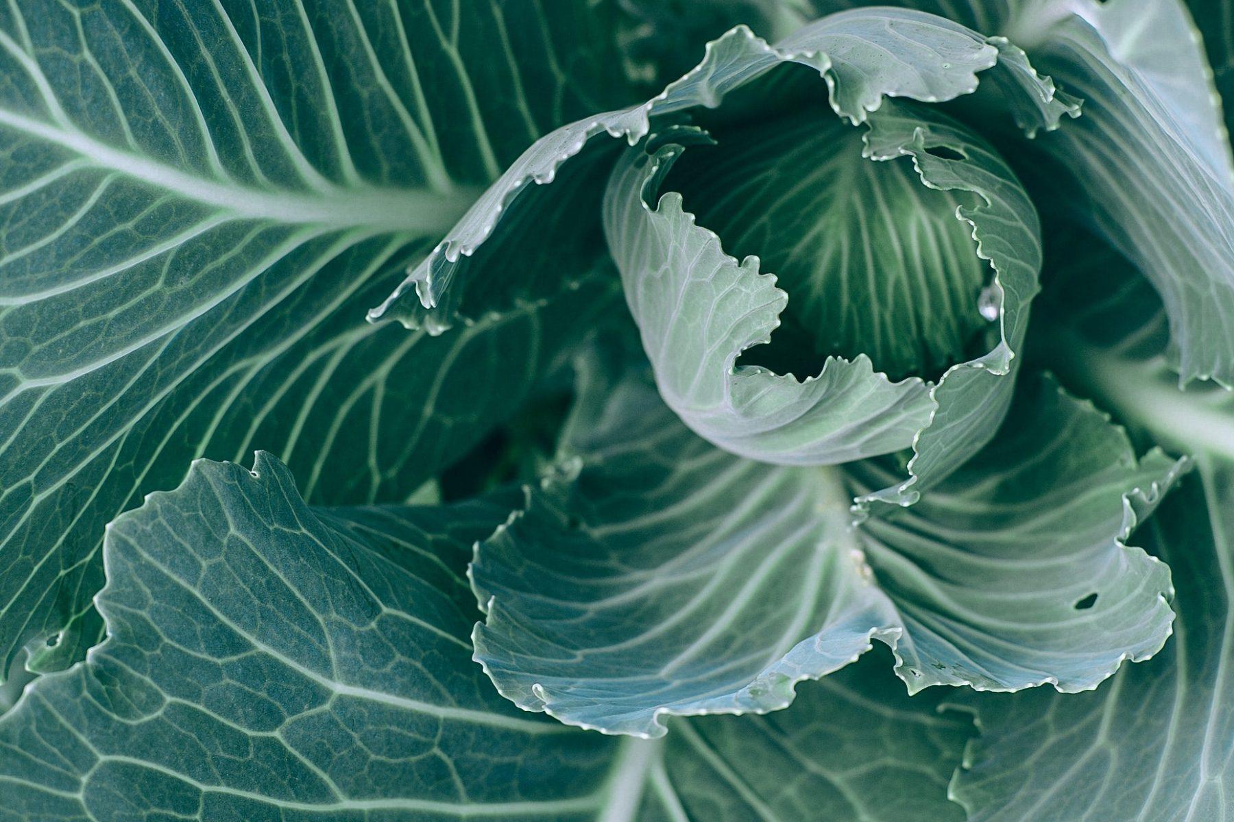 Cultivar orgánico: la importancia de la biodiversidad en la salud de tu huerto