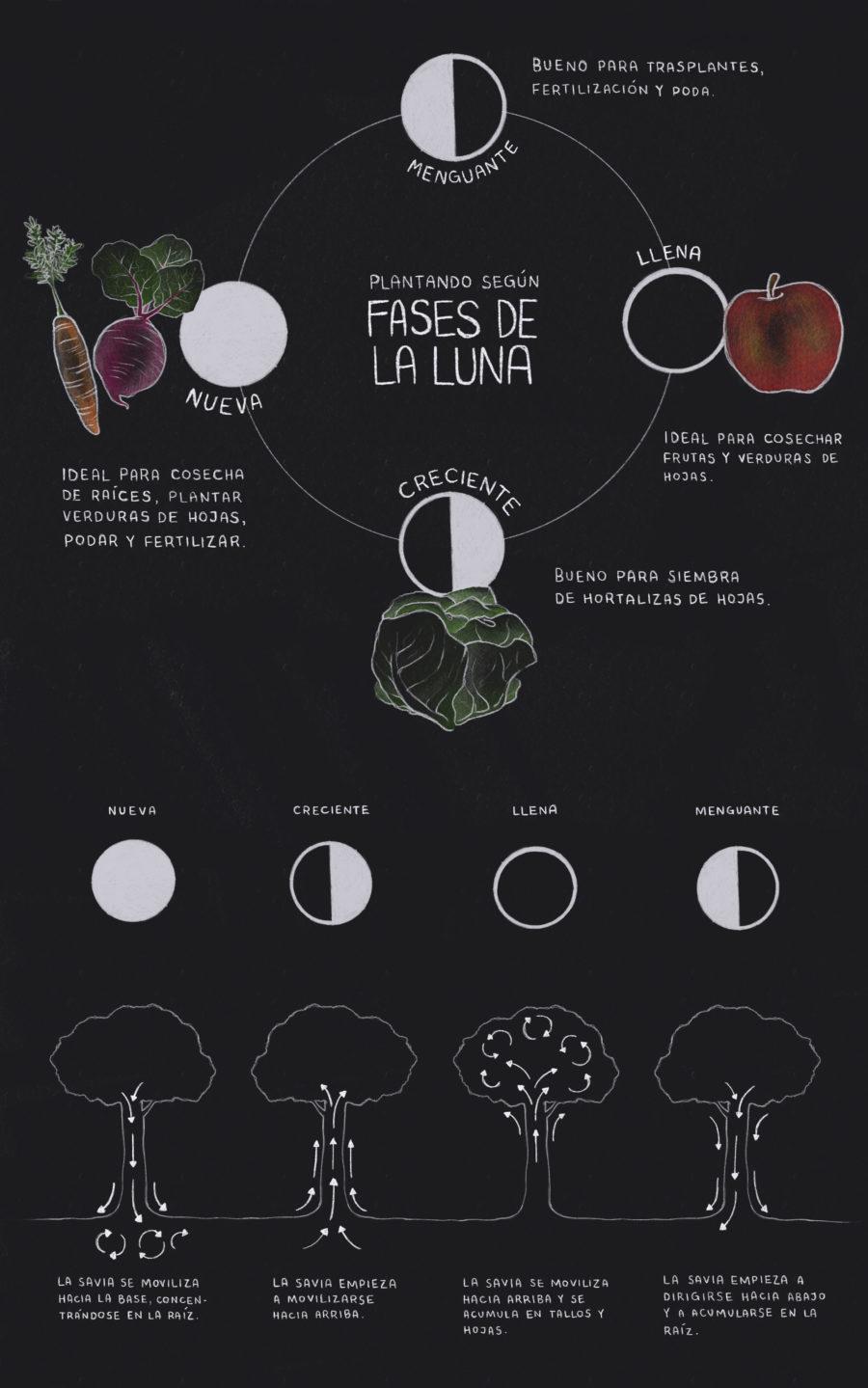 Infografía Fases de la luna