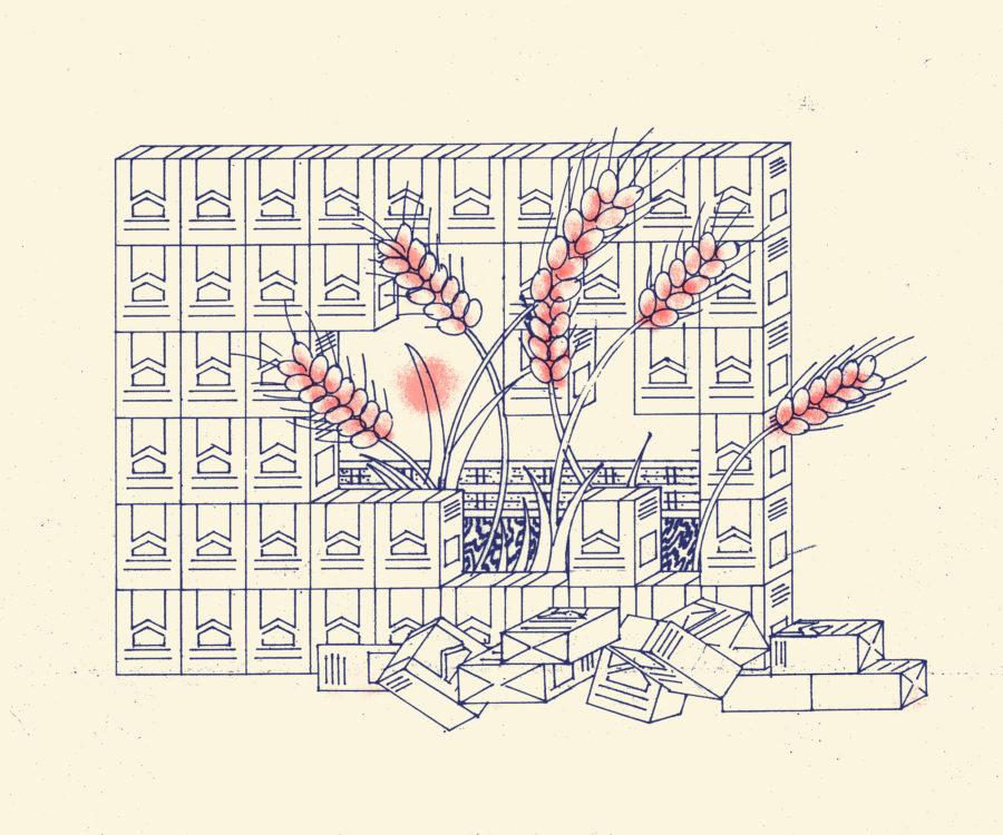 Revolución del Trigo, por Jordi Casanueva