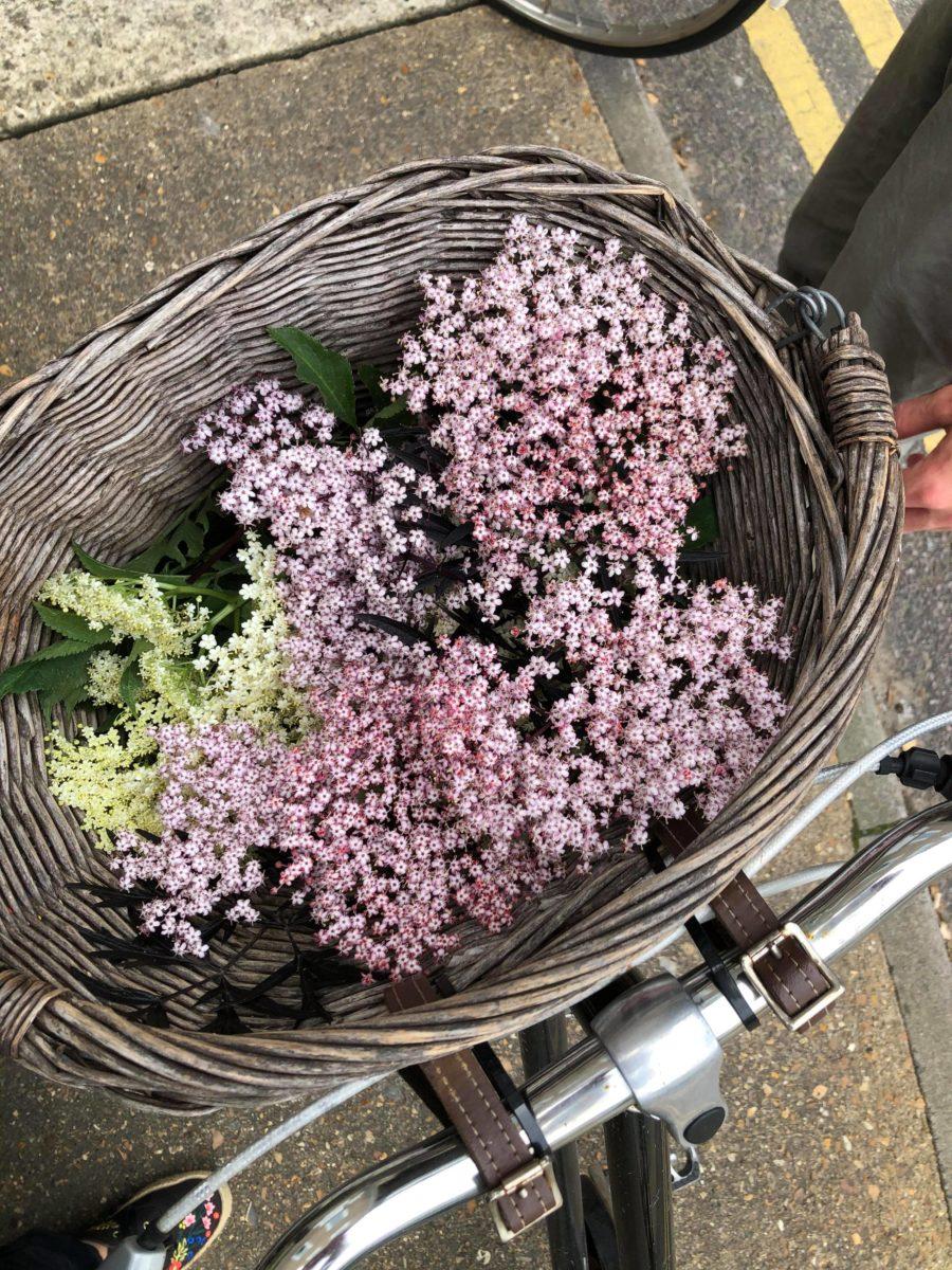 Flores de sauco silvestres