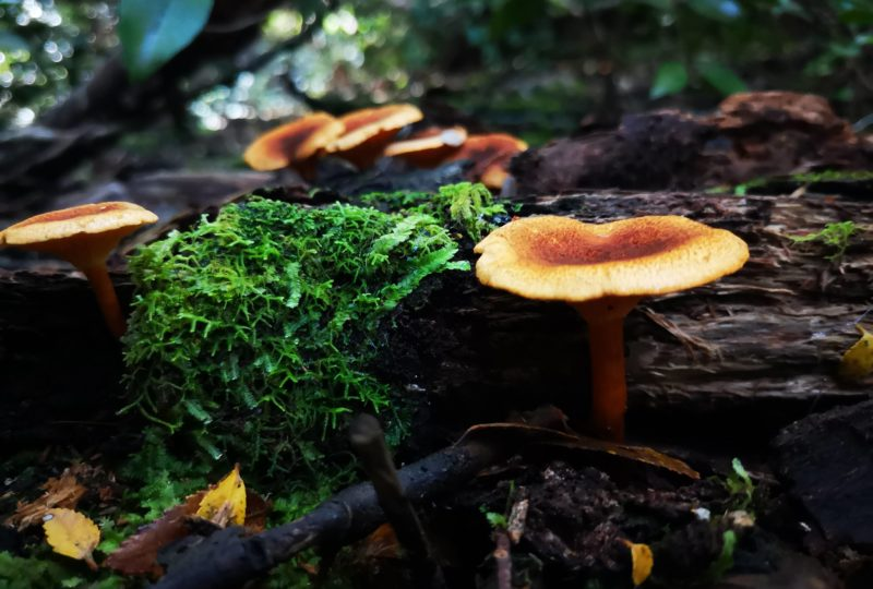 Conociendo las impresionantes funciones del micelio