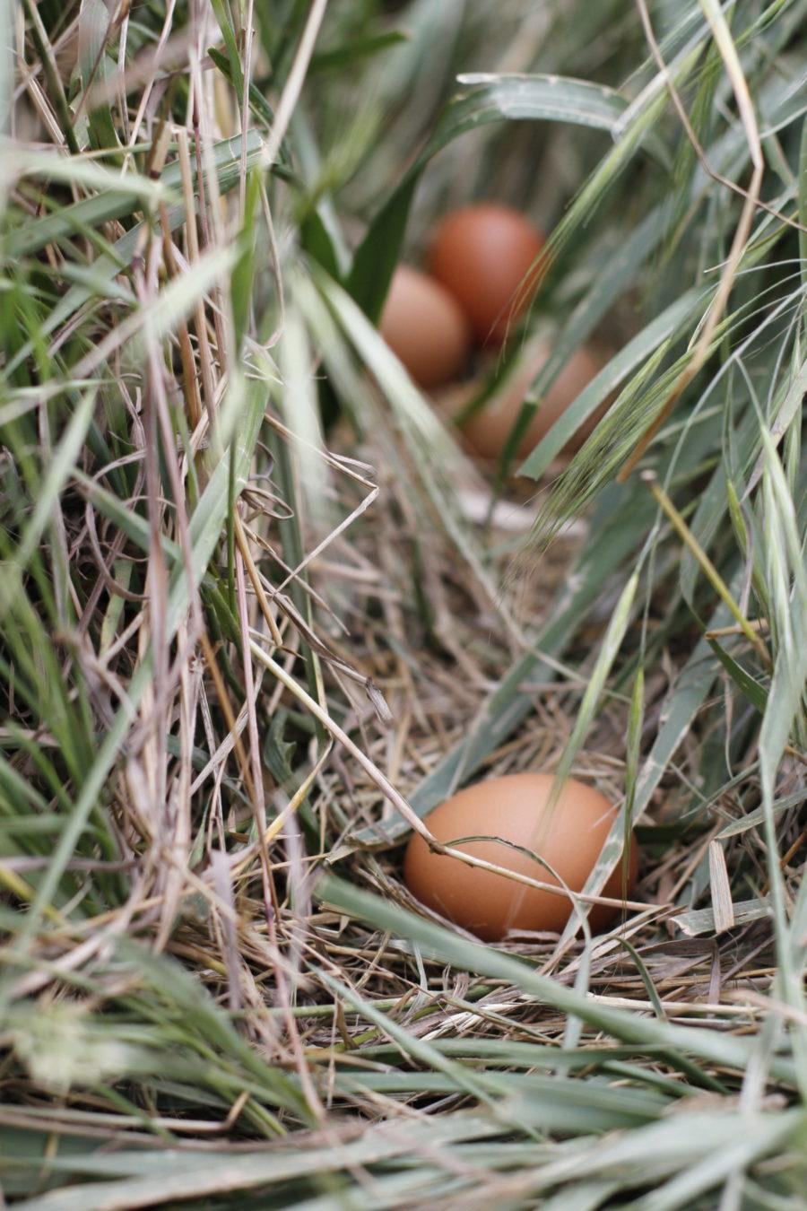 Huevos granja bravial