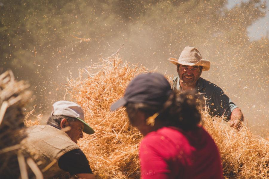 Proceso de cosecha - Foto por Pascale Mouchabek