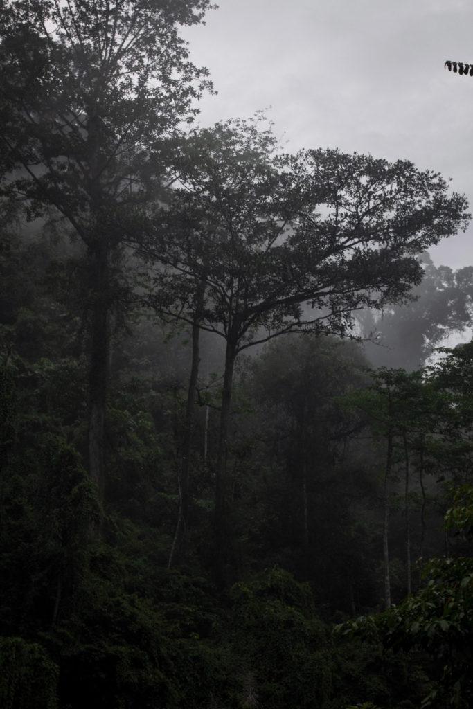 Bosque de Sumatra