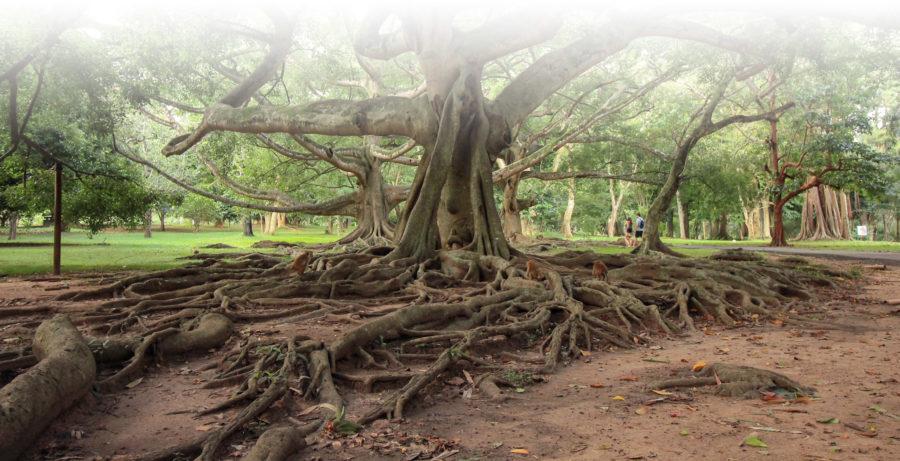 Raíces árbol - Foto por Alberto Marcías