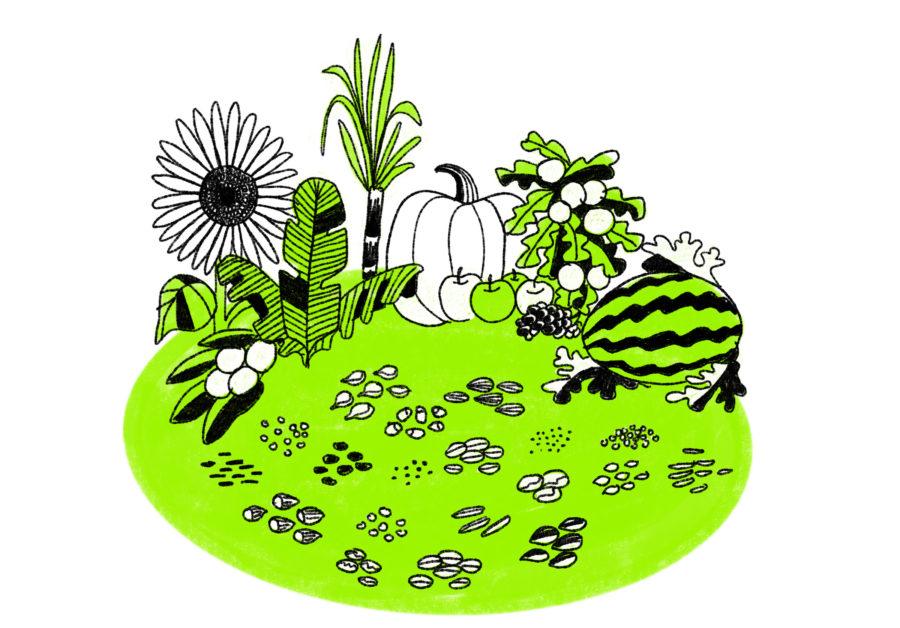 La importancia de las semillas