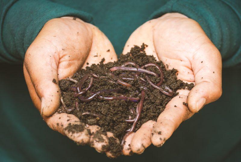 Creando más compost y menos residuos
