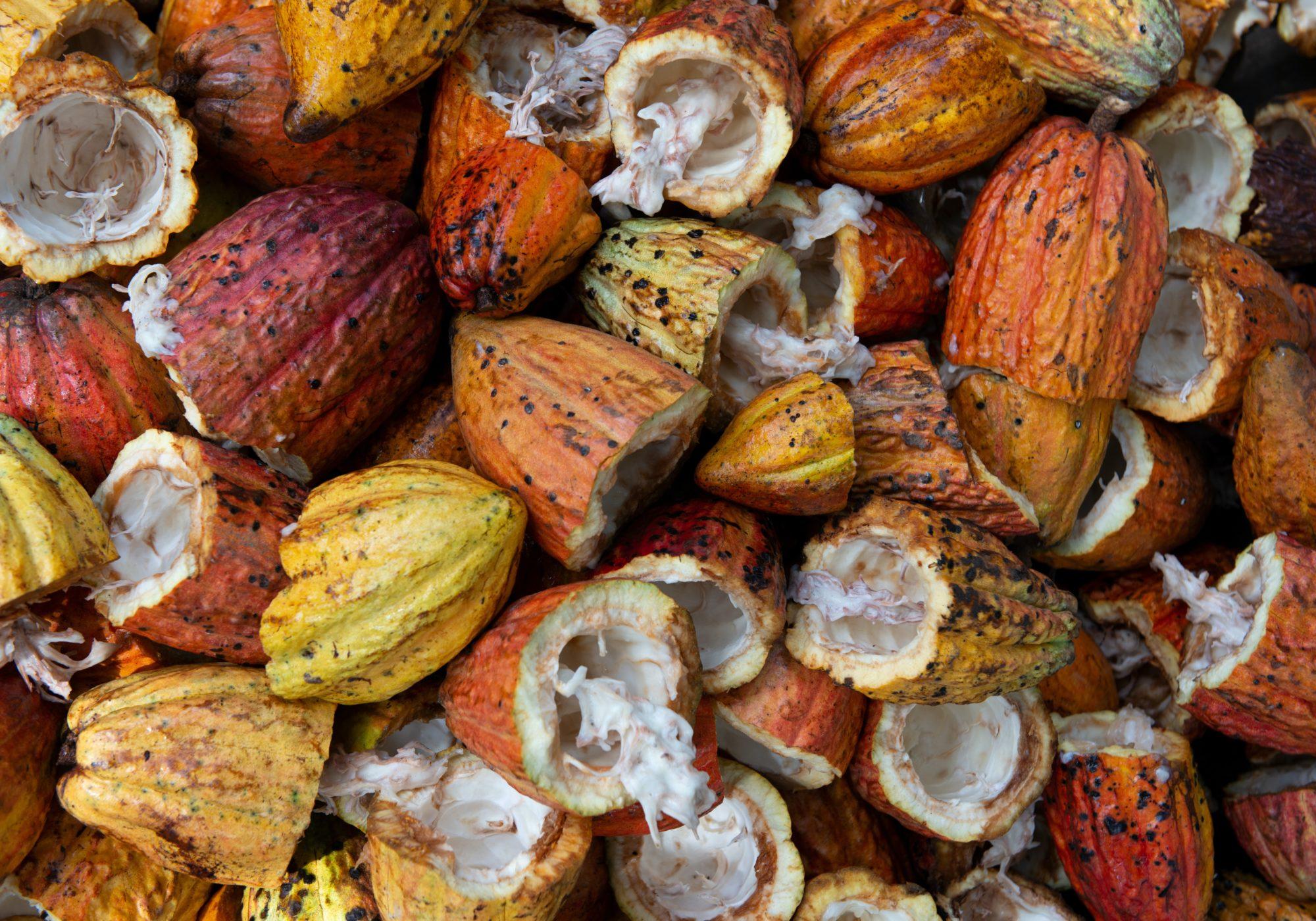 De dónde viene el chocolate, sus orígenes y cómo elegir una barra sustentable